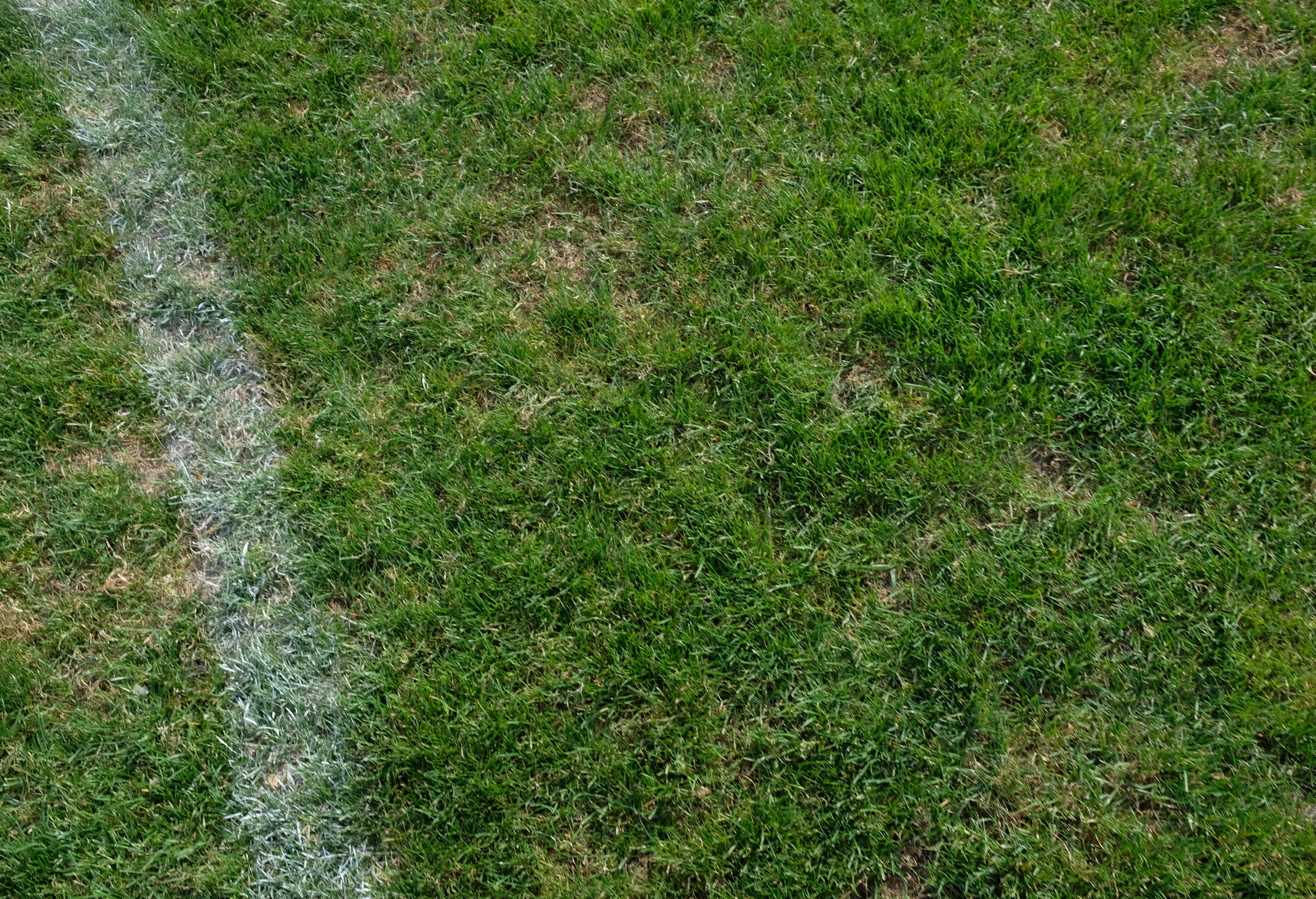 Acker oder englischer Rasen?